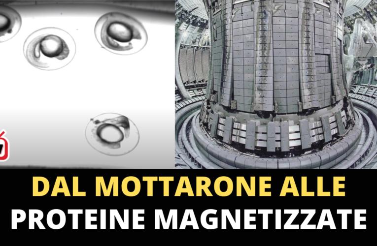 27-05-2021 DAL MOTTARONE ALLE PROTEINE MAGNETIZZATE